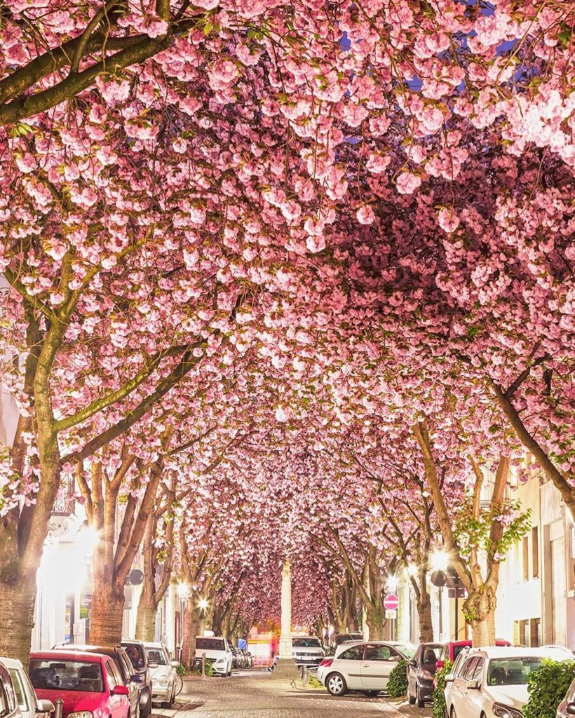 . Dance through cherry blossom tunnels on Haa Street in the Old Town area of Bon...