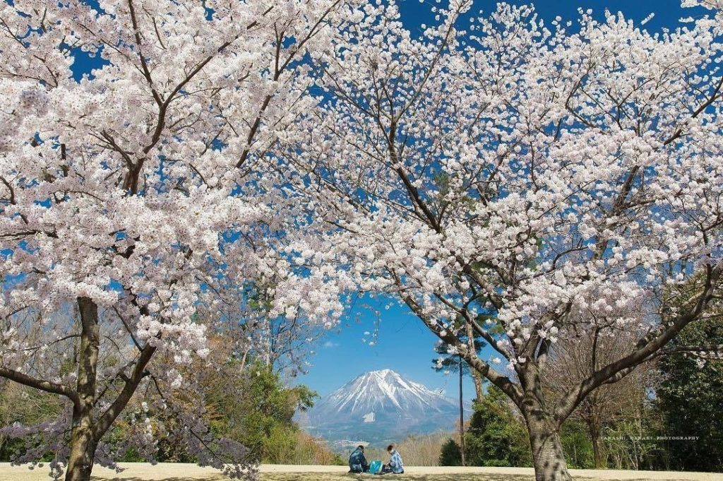 At #TottoriHanakairo Flower Park, 200 cherry trees will come to full bloom just ...