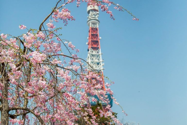 Come to Tokyo this spring and find the best #sakura locations in the capital! Le...