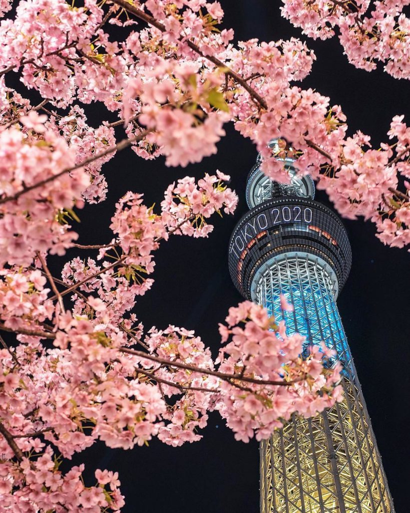 The cherry blossoms have started to flower in Tokyo! @hakuchuu1882 snapped this ...