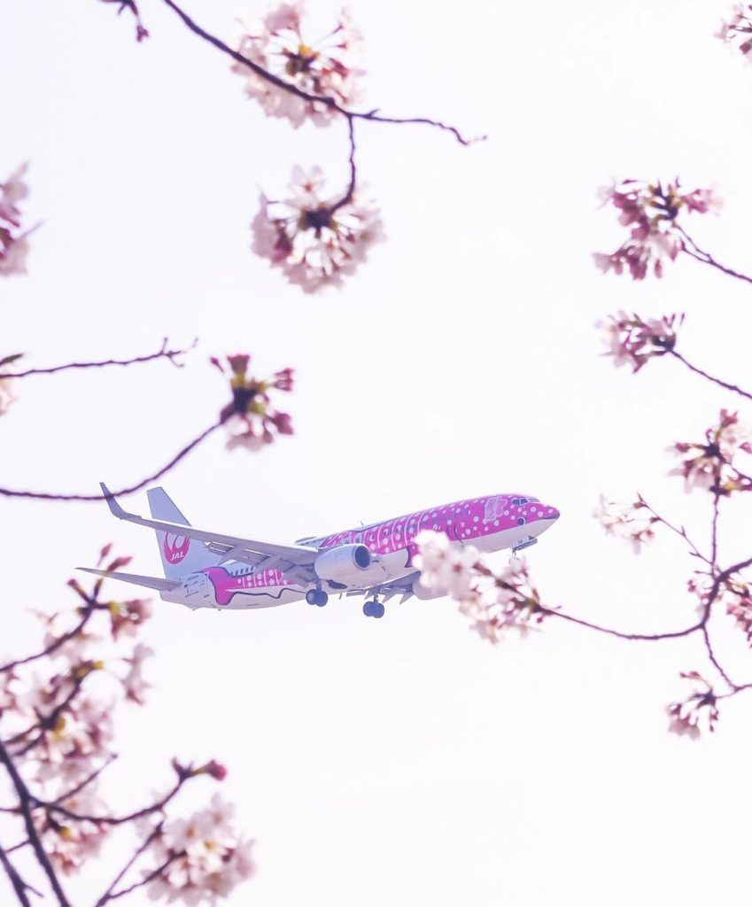 .⠀ #JAL #ChargeUpMarch A Sakura-colored Jinbei Jet looks right at home when view...