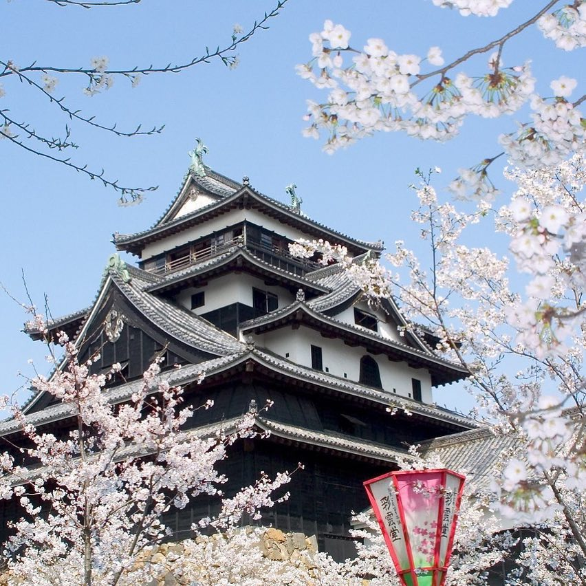One of Japan's 12 remaining original castles, Matsue Castle is regal and beautif...