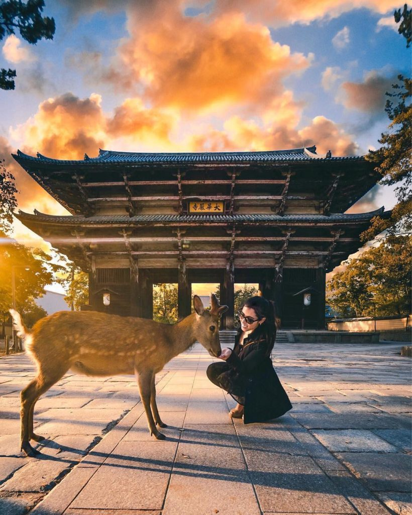 ⠀ A chance encounter with a deer at Todai-ji, Nara Prefecture. #JAL #MyAprilAdve...