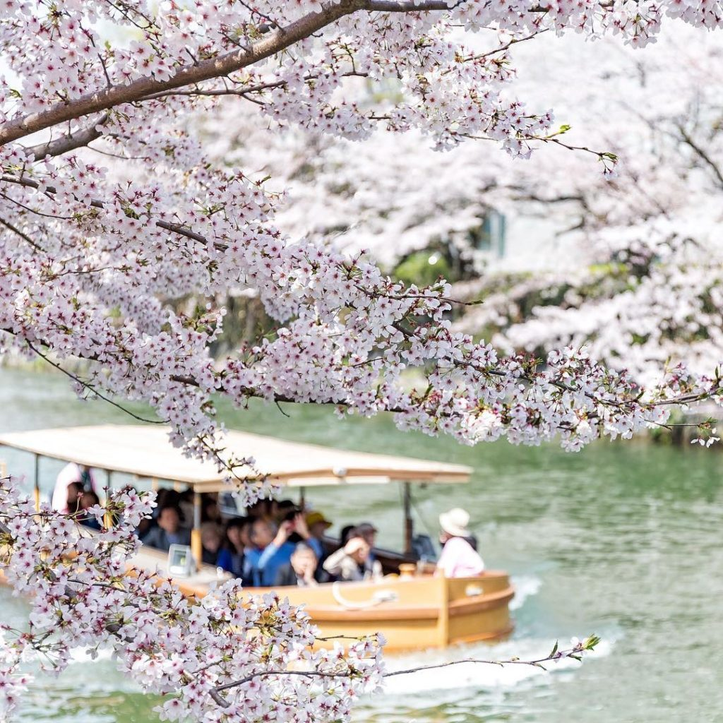 . Enjoy a trip through the lower part of Japan's cherry blossom corridor! Okazak...
