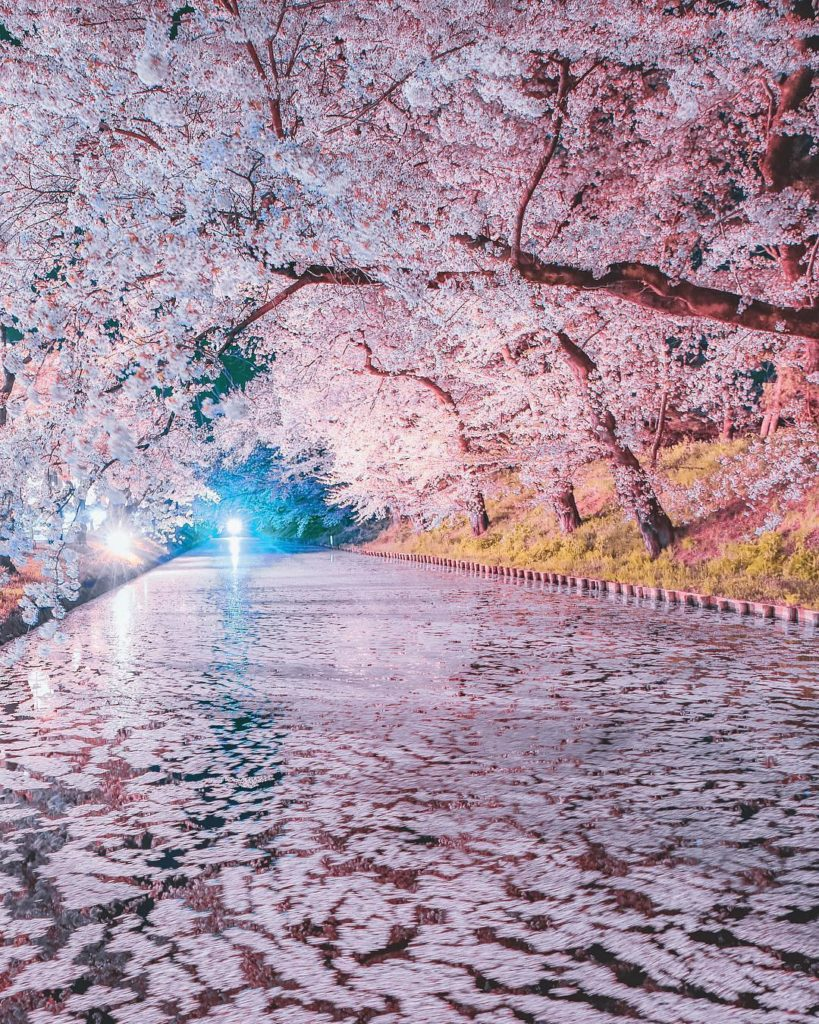 Prepare for a cold trip up north where some of Japan's best cherry blossom spots...
