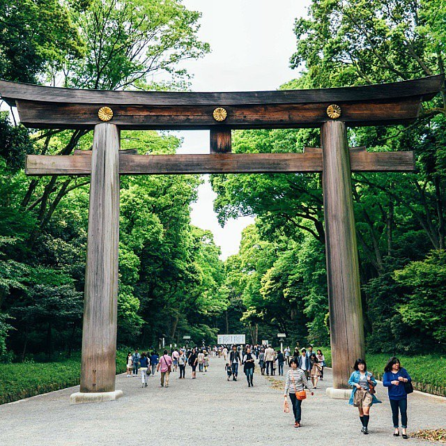 Enveloped by thick broad-leaved evergreen forest, the largest wooden shrine gate...
