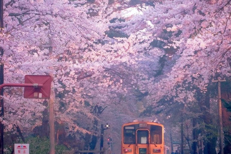 Whilst the sakura season is over in much of the country, those travelling to No...