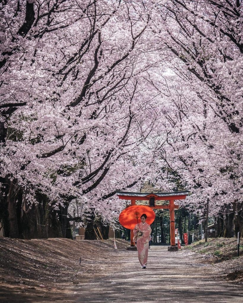Have you been lucky enough to join us for sakura season this year?  Post your ph...