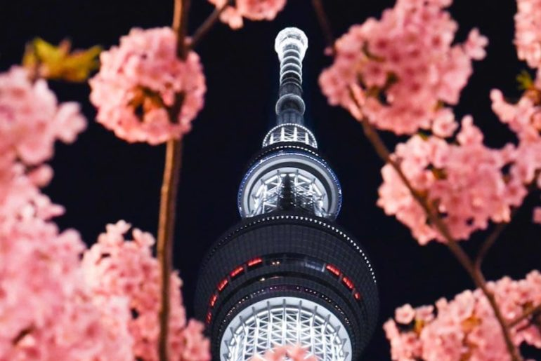 A dramatic nighttime view up to Tokyo Skytree during the cherry blossom blooming...