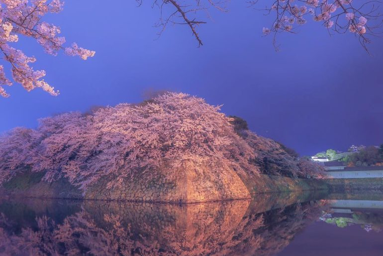 If you didn't know, Hikone Castle's moat is just as beautiful as the castle itse...