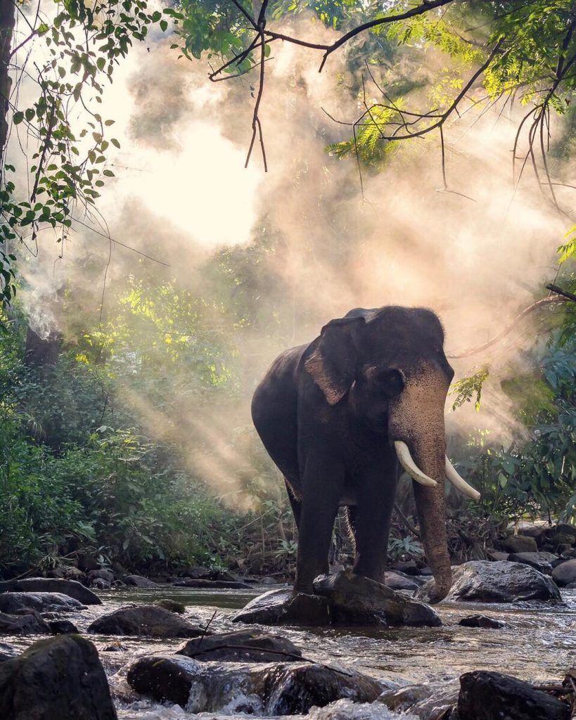 ⠀ The magnificent elephants in Thailand are truly a sight to behold. Take a hike...