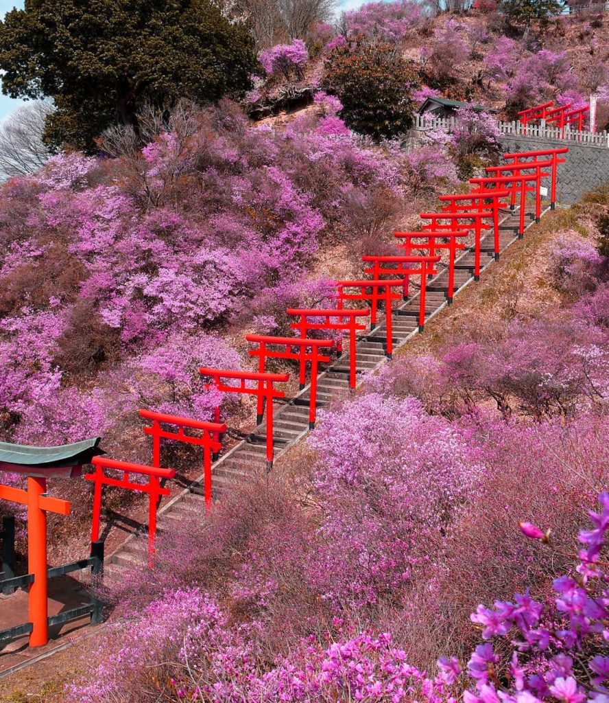 If you're visiting Kyoto this month, consider taking a day trip to Miyazu, appro...