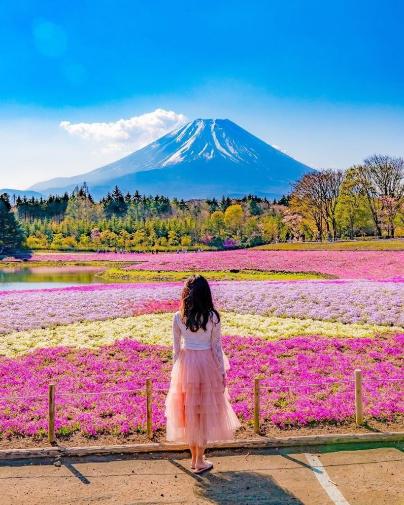 Breathtaking views?  Amazing flowers?  The Fuji Shibazakura Festival gets an 11 ...