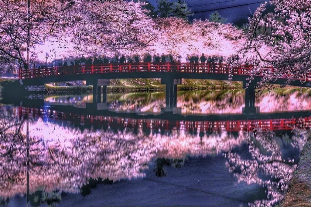 From mid-April to early May, you can witness cherry blossom dreams in Hirosaki P...