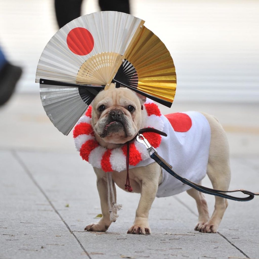 People waved their flags (and dressed up their dogs) to celebrate Emperor Naruhi...