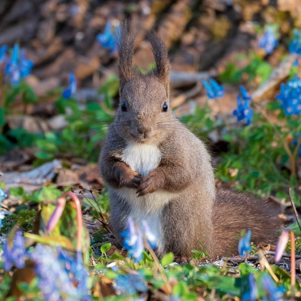 Hey there, little fella!  Spring has well and truly sprung in Hokkaido, with bea...