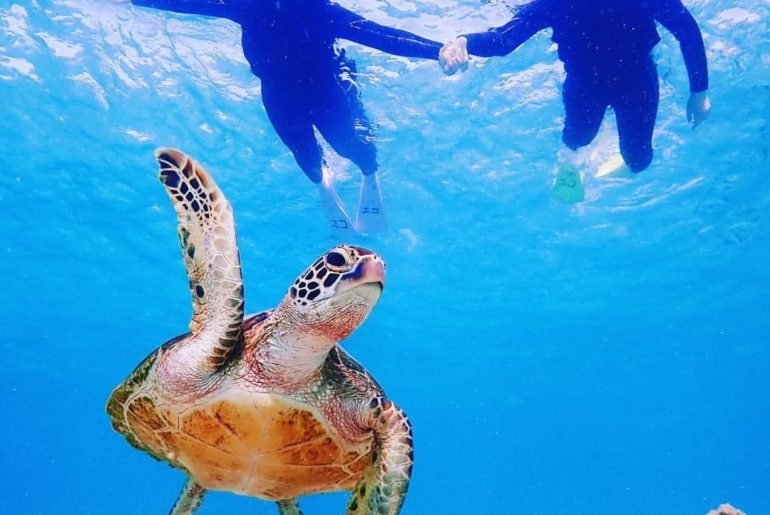 Oh hi, guys!  @aiumi0926 snapped this shot in the waters off the coast of Miyako...