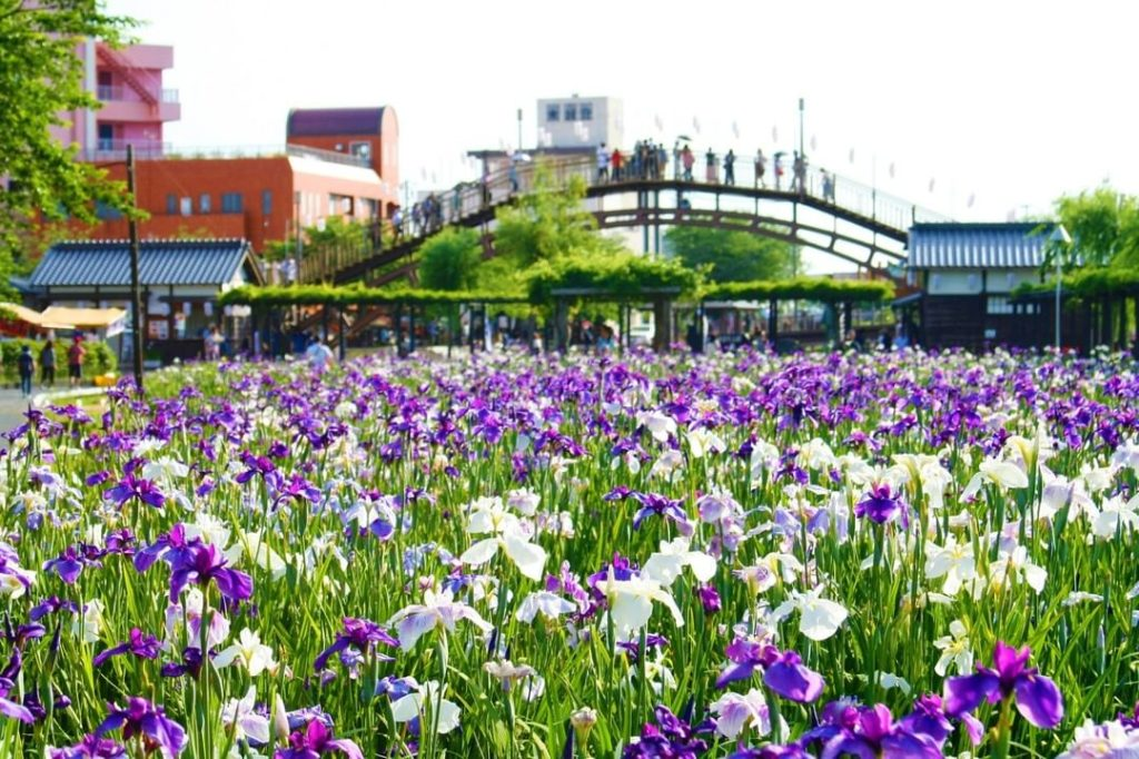 Don't miss the Suigo Itako Iris Festival in June, when you can see thousands of ...