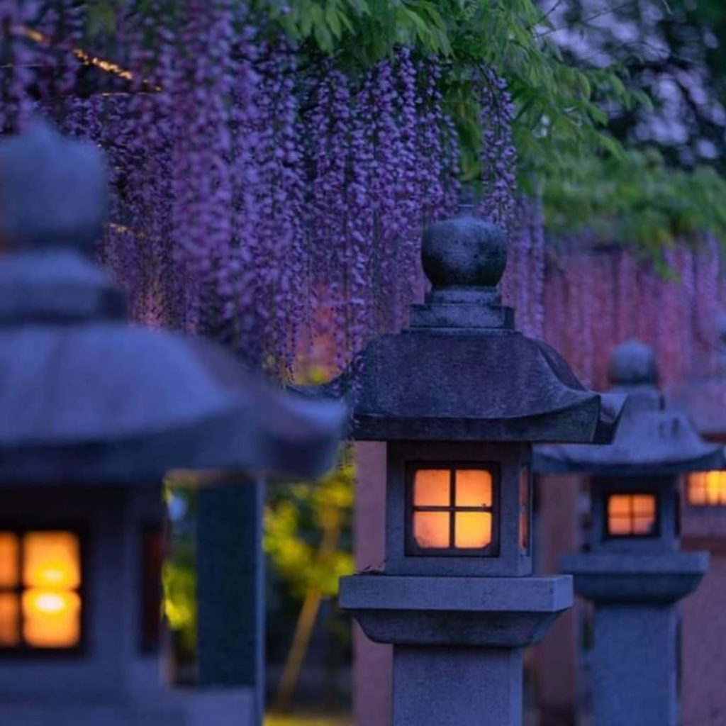 May is time for dreamy lanterns and wisteria in Shiga Prefecture.  Thanks to @ju...