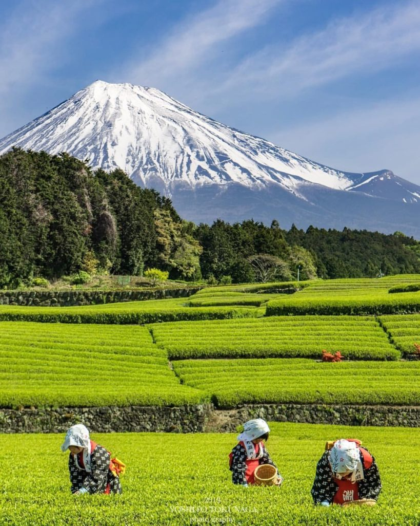 After a tea-rrific view? All puns aside, many of Shizuoka's scenic tea fields sh...