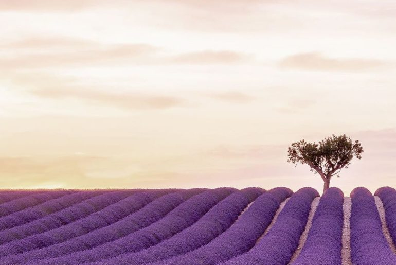 . The immensely instagrammable lavender fields of Plateau de Valensole are a mus...