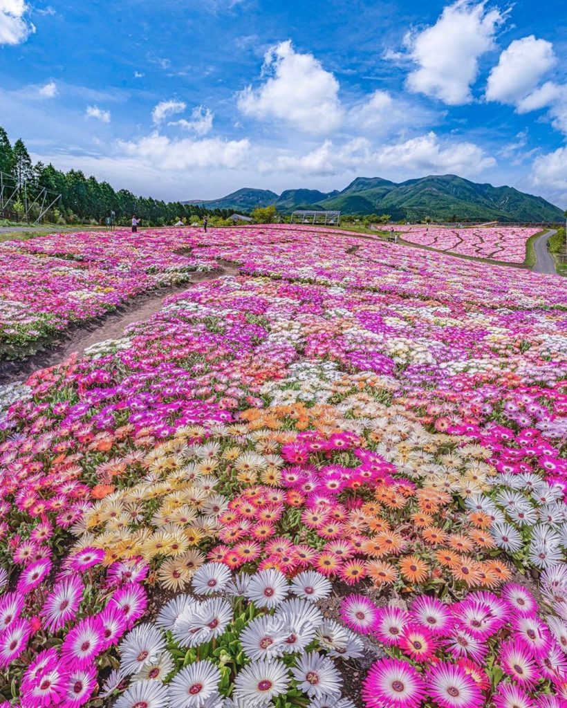Pretty in pink...and orange, and yellow, and white! These colorful fields were c...