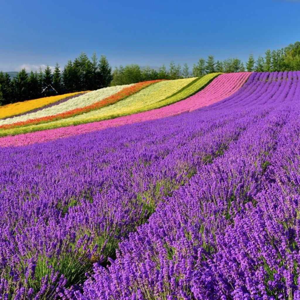 Are you ready for summer? We can't wait for Hokkaido's flower fields to bloom!  ...