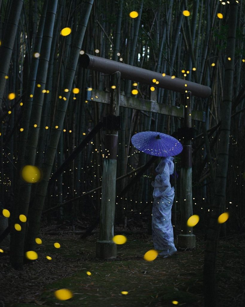 Firefly season in Japan is limited to a relatively short period of time, but wha...