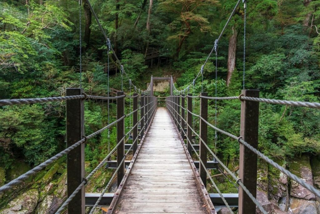 Ready for true adventure? Check out lush Yakushima, the inspiration for the famo...