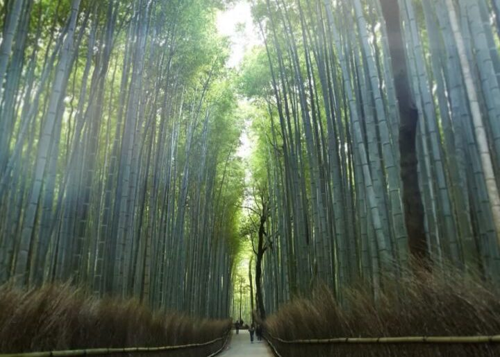 Welcome to the Japanese art of 'forest bathing' and why we all need a good dose ...