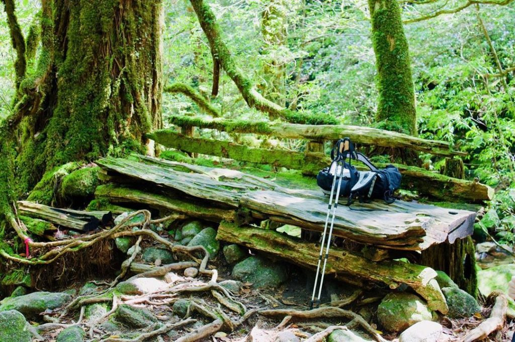 The forests are what draw people to Yakushima, famous for inspiring the scenery ...