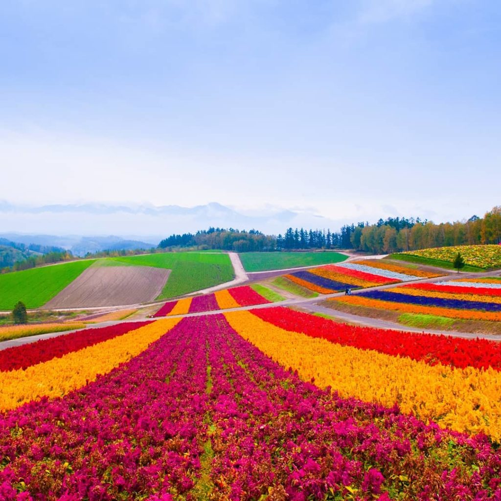 Located in the heart of Japan's northern island of Hokkaido, Furano is a nature-...