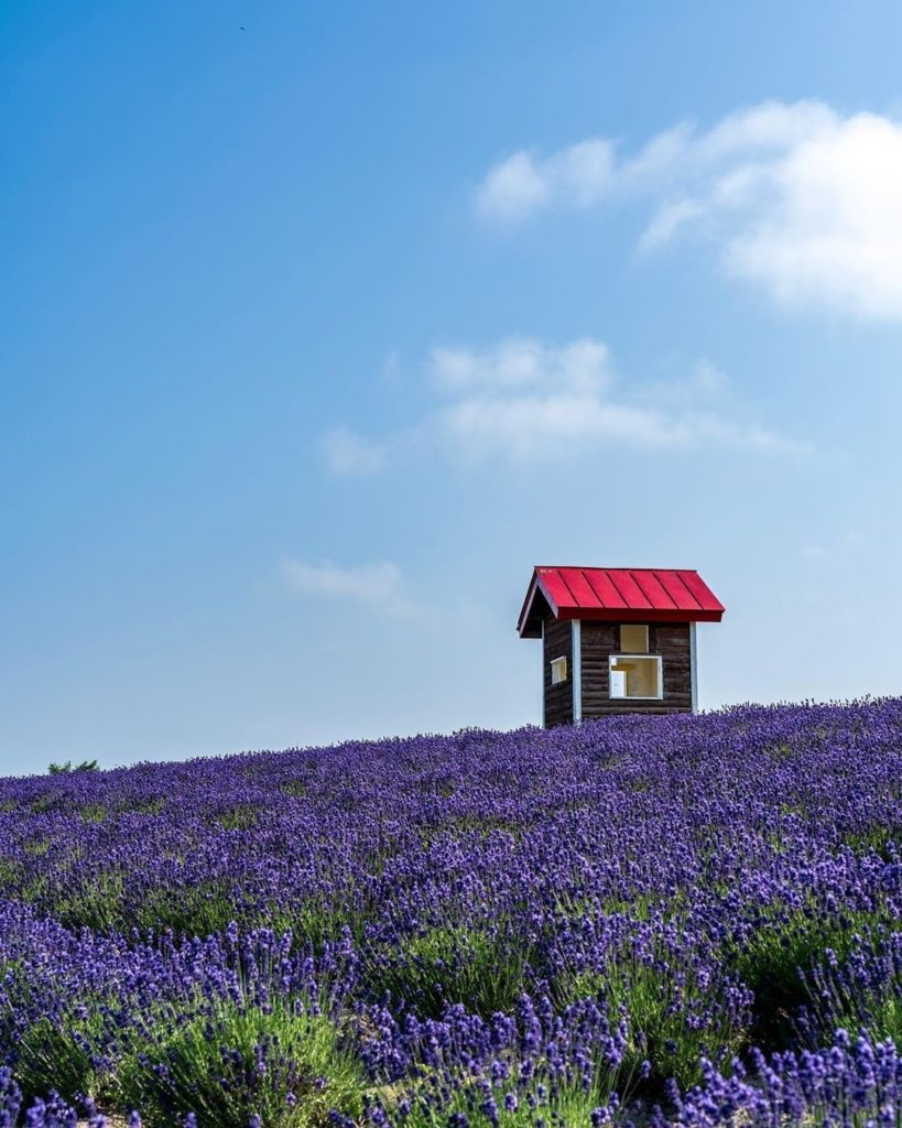 Photographer @usk.com_usk.com_ caught this dreamy shot of  lavender at Hinode Pa...