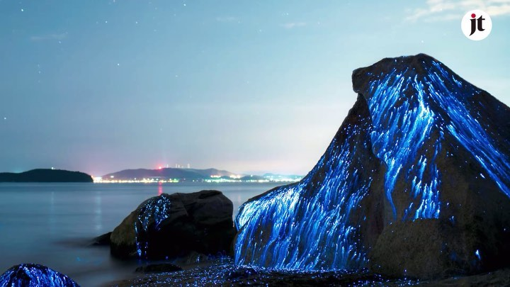 In summer, coastal areas on the Seto Inland Sea are positively glowing thanks to...
