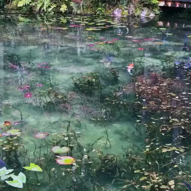Step straight into a Monet masterpiece with a visit to 'Monet's Pond' in Seki Ci...