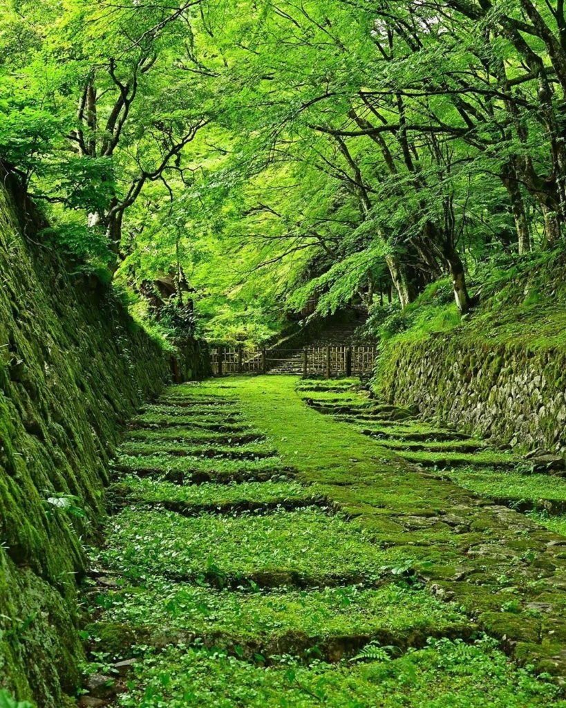 This view of Hyakusaiji Temple's mossy stairway makes you want to take a deep br...