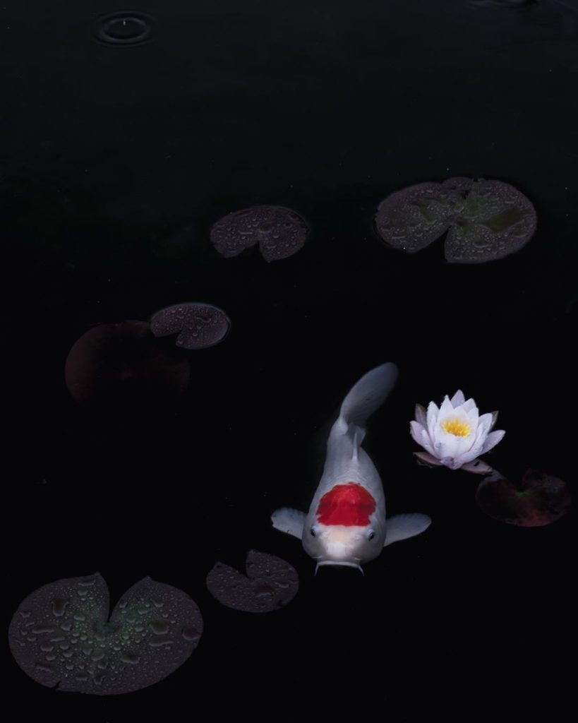 You can find koi gracing ponds all across Japan. These beautiful fish are consid...