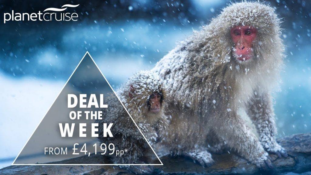 Snow Monkeys, Kyoto, Mt. Fuji & Tropical Japan Tour and Cruise Deal of the Week | Planet Cruise