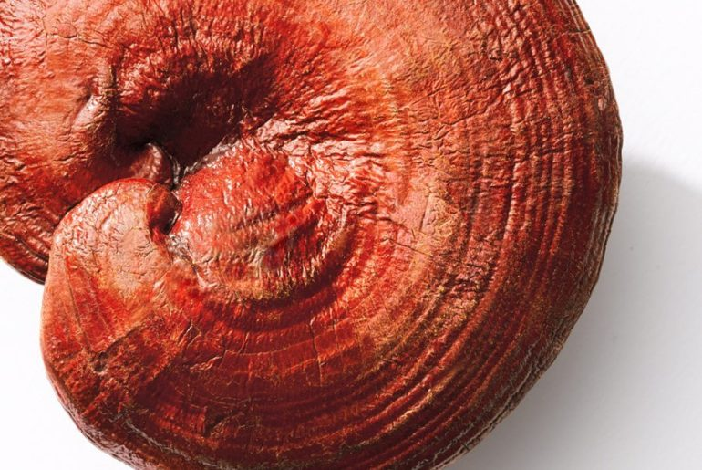 Reishi Mushroom is a rich anti-oxidant known to hydrate and visibly reduce aging...