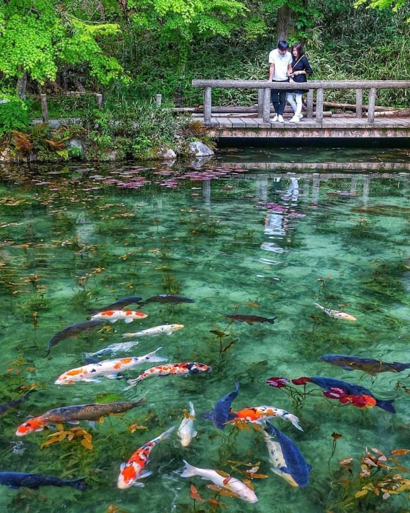 Looks like a scene from a painting, doesn't it? This pond in Gifu Prefecture ear...