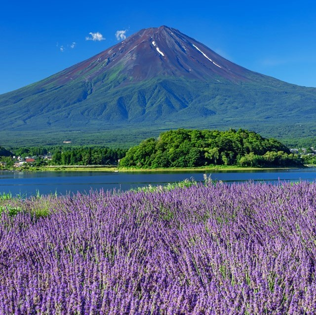 Did you recognize Mount Fuji without the mountain's usual layer of snow?  If you...