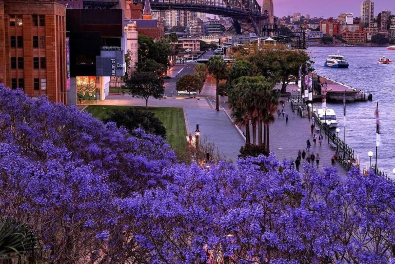 . The purple leaves of jacaranda trees set the mood in Sydney from October to No...
