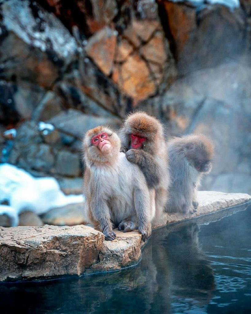 Plan your visit to the only place in the world where monkeys bathe in hot spring...