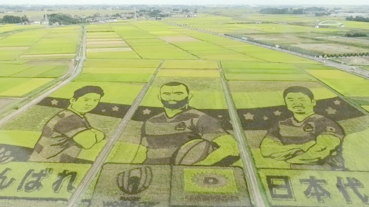 Rugby World Cup 2019 Japanese Rice Paddy Art in Gyoda - Alo Japan