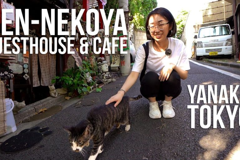 nen-nekoya: A place cats can call home (Tokyo, Japan)