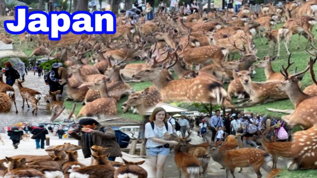 Nara Park In Japan || Deer pakr vacation Travel