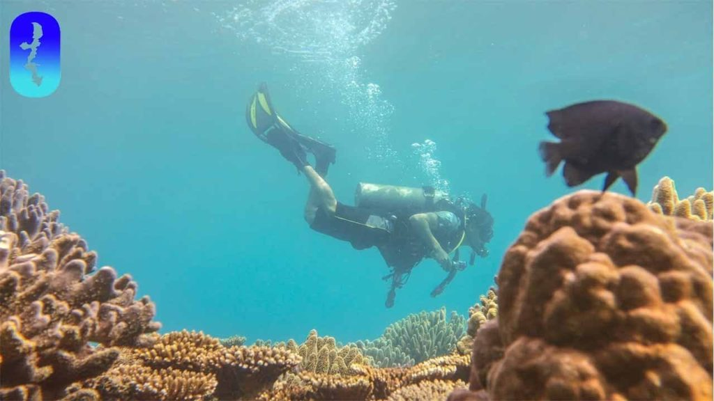 Beautiful Reefs and Ugly Ships—Diving in Okinawa Japan