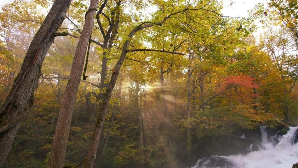 One of the Tohoku region's, and indeed Japan's most scenic autumn spots is the O...
