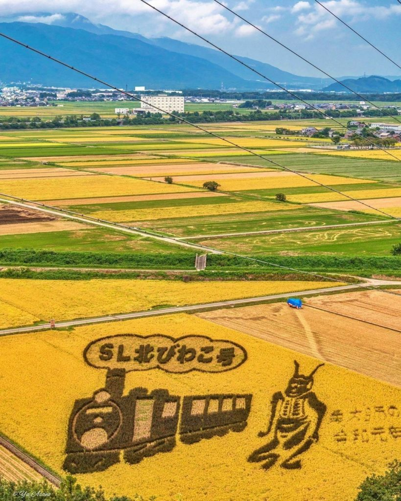 Find a rice field, and turn it into large-scale art! These kinds of creations ar...