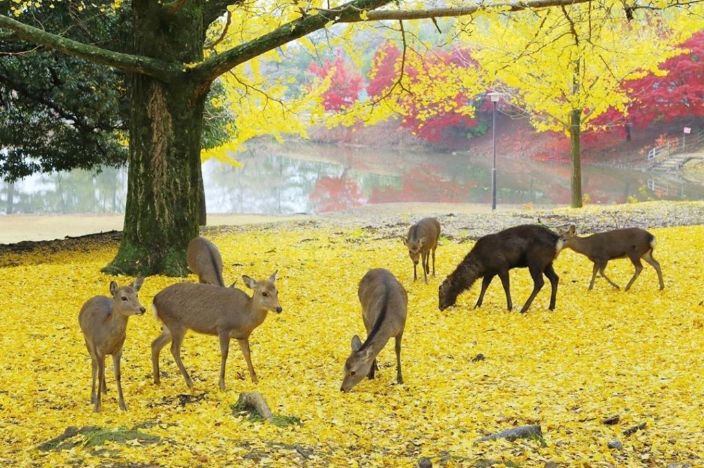 We can't wait for fall to start! From north to south, leaves around country tran...